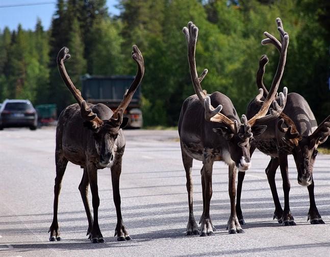 På fel sida av gränsen. Den nuvarande definitionen av gränsområden kan splittra byar i övre Lappland.