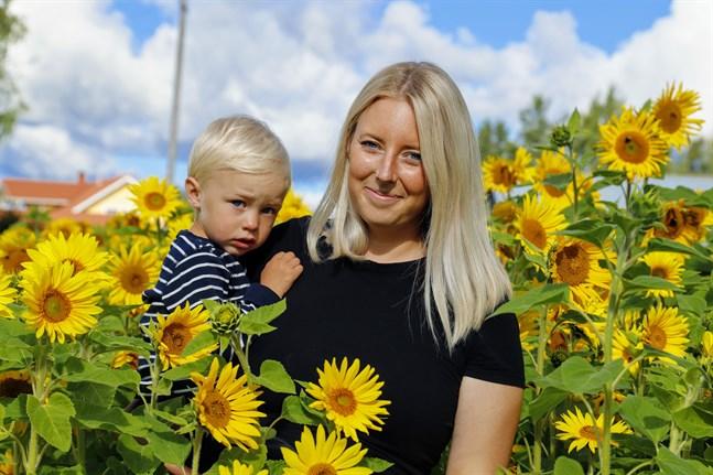 Hanna Aspholm i Övermalax har ett solrosfält på åkern utanför huset. Det är lite större än i fjol, och hon planerar ett ännu större nästa år.