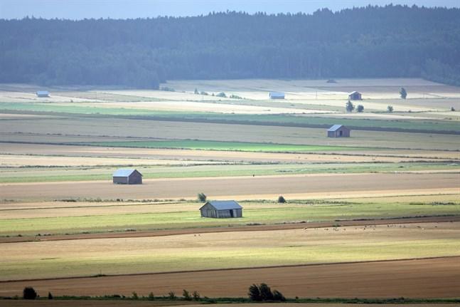 Skörden blir i år medelmåttig, förutspår Naturresursinstitutet.