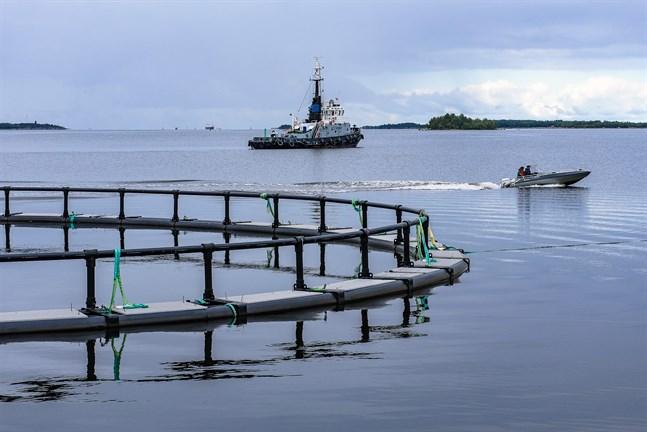 Fiskodlingskassar i hamnen i Jakobstad. Arkivfoto.