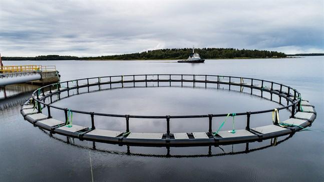 Hamnen utvecklas inte av fiskkassarna, skriver Kjell Vikman.