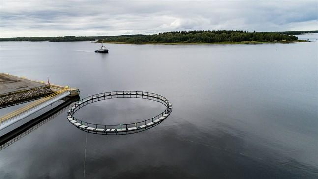 Alla yrkesfiskare jag har talat med om har varit negativa till fiskodling i havet, bland annat som en följd av miljöbelastning, skriver Simon Holmstedt.