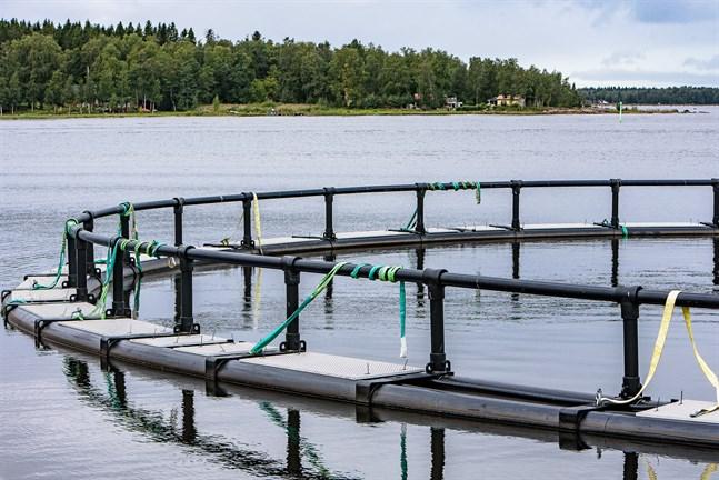 Allt har gått rätt till angående fiskodlingen i Jakobstad, skriver Pontus Blomqvist.