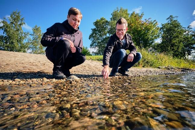 Anna Bonde och Vincent Westberg på NTM-centralen är oroliga över hur havet mår. De många observationerna av cyanobakterier i Kvarken i sommar visar att allt inte står rätt till.