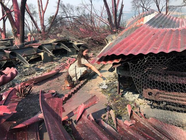 Italia Guterrez, 9, söker igenom bråtet från sin familjs nedbrända husbil i Talent, Oregon. Det rosaröda pulvret är ett släckningsmedel som släppts via flyg.