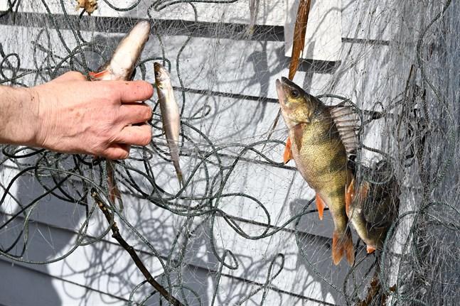Bland annat nätfiske förutsätter att man betalar fiskevårdsavgift.