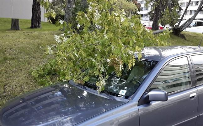Om stormen knäcker ett träd som faller på din bil måste du ha kaskoförsäkring för att få ersättning, uppger försäkringsbolagen Lokal-Tapiola och If.