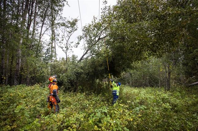 Skogsröjaren Martin Björk hjälper Vasa Elnät efter stormen Aila. Både Vasa Elnät och Herrfors Nät jobbar fortfarande febrilt för att reparera skadorna.
