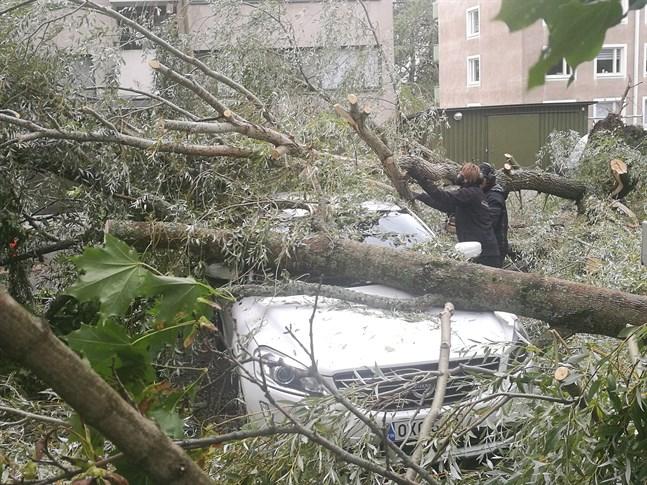 Inte ett, utan två olika träd har fallit över den här bilden i Vasa centrum.