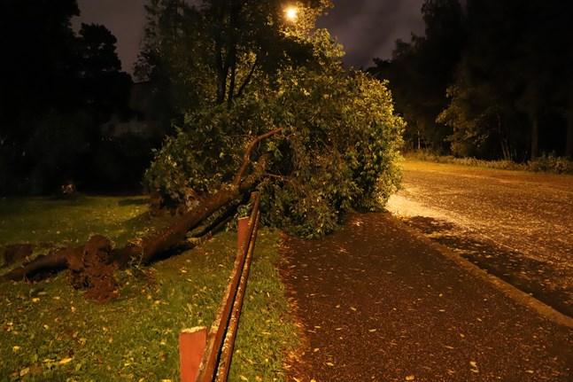 Räddningsverket har haft flera uppdrag på grund av stormen. Det handlar främst om omkullblåsta träd. Det här har blåst omkull i Brändö i Vasa.