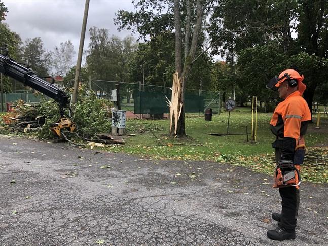 Ett träd bredvid tennisbanan i Aaltoparken har gått mitt i tu under natten.