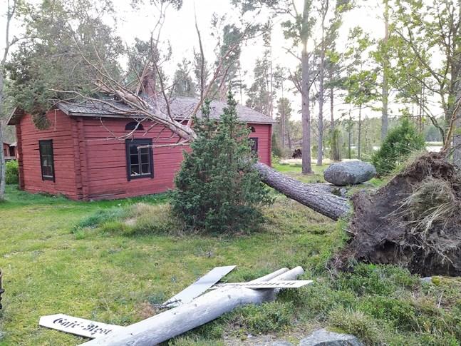 Stormen fällde flera träd på Kilens hembygdsgårds museiområde i Sideby. En tall föll på taket till 1700-talshuset.