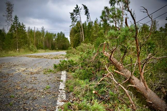 Höststormen fällde träd och orsakade elavbrott främst på Finlands västkust.