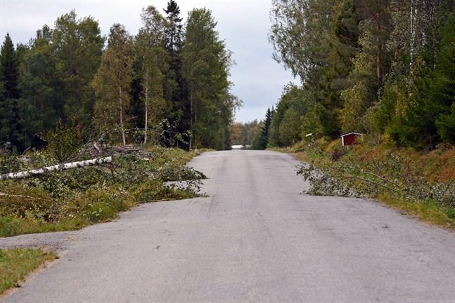 Räddningsverket hade ett stort antal uppdrag som gällde att röja undan omkullblåsta träd från vägarna. Bilden från Bäcklidvägen i Närpes.