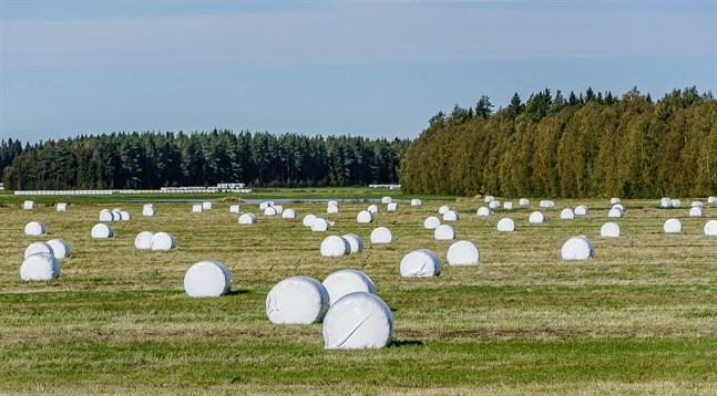 Klimatförändringen påverkar jordbruket direkt.