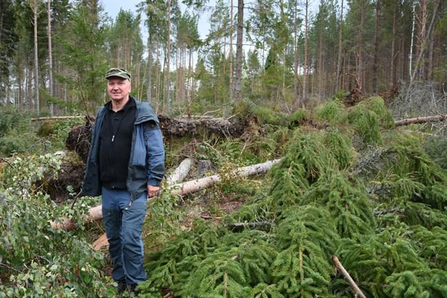 En vild gissning är att mellan 50 000 och 100 000 kubikmeter blåst omkull i svenska Österbotten, säger Kjell Huldén.
