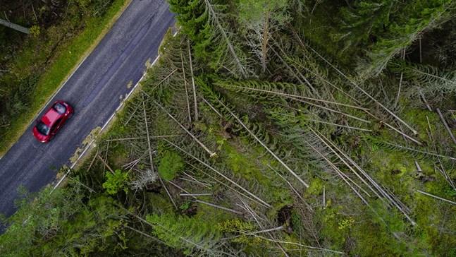 Stormskadorna blev stora för Karleby stad och för många privata skogsägare efter Aila. Den här bilden är tagen vid Knifsundsvägen i Öja några dagar efter stormen.