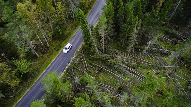 Skador längs Knifsundsvägen i Öja efter stormen Aila i september.