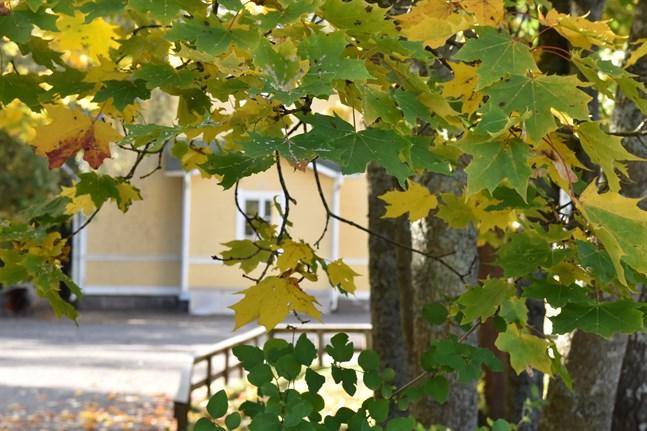 Än dröjer det tills träden tappar sina löv. Södra Finland har välsignats med sällsynt varmt höstväder i slutet av september i år.