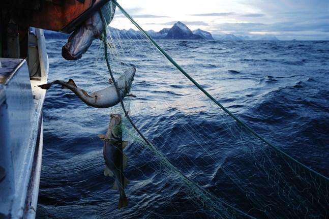 Omkring hundra ton fiskeredskap har plockats upp från havsbottnen i Norge. Arkivbild.