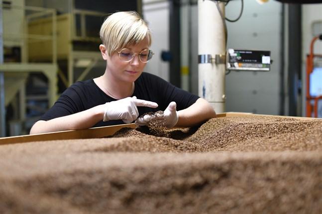 Efter sorteringen är allt skräp borta och bara rena kumminfrön återstår. Kvalitetschef Frida-Maria Engelholm kollar ett parti kummin innan det packas.