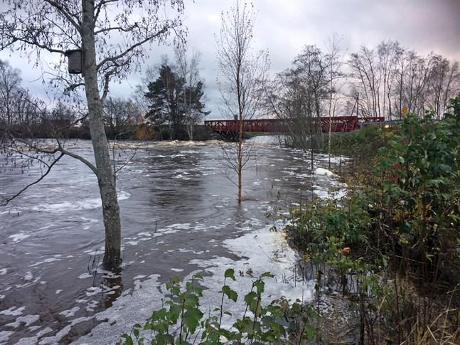 Vattenståndet är fortfarande högt i åarna. Så här såg det ut i Svinviken vid Finby bro i Närpes å på onsdag morgon.