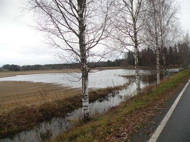 Vattnet i Kyro älv är högt i Skatila i Korsholm.