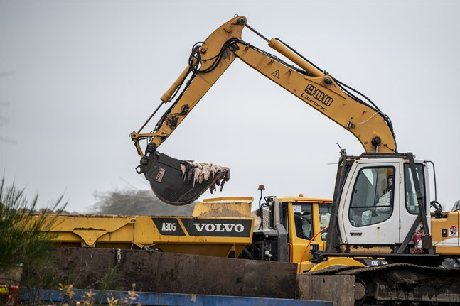 Grävmaskiner arbetar med att gräva ned avlivade minkar i Holstebro på tisdagen.