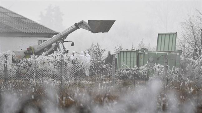 Personer med skyddskläder på en gård i Ungern, som drabbades av fågelinfluensa tidigare i år. Arkivbild.