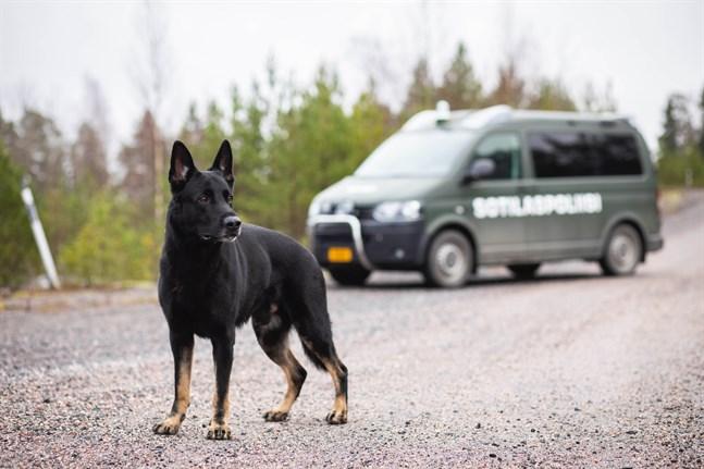 Militärhunden Muggy är årets militärhund 2020.