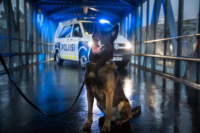 Polishunden Vinha är årets polishund 2020.