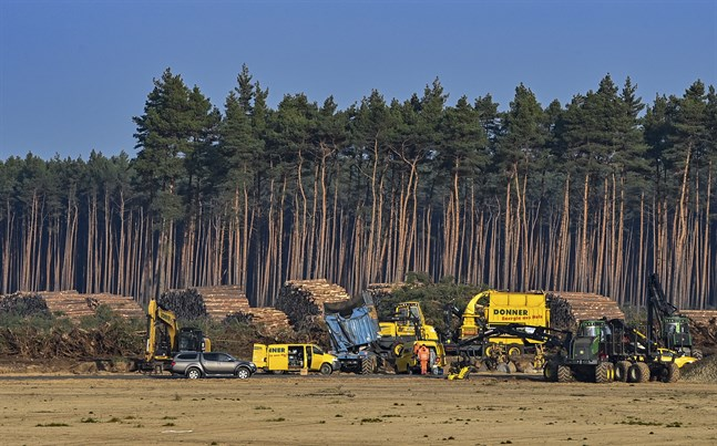 Trädfällningen har stoppats på platsen där Teslas nya fabrik ska ligga.
