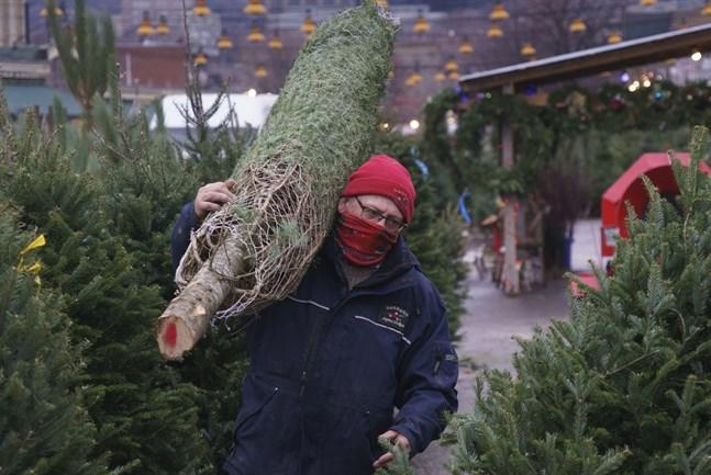 En man packar upp julgranar på en marknad i Montreal i Kanada. Arkivbild.