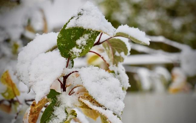 På söndagskvällen väntas mer snö.