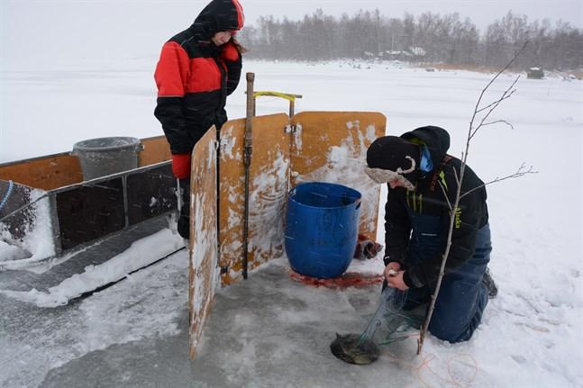 Ann-Sofi Backgren lär sig vinterfiske av fiskaren Tommy Nystrand.