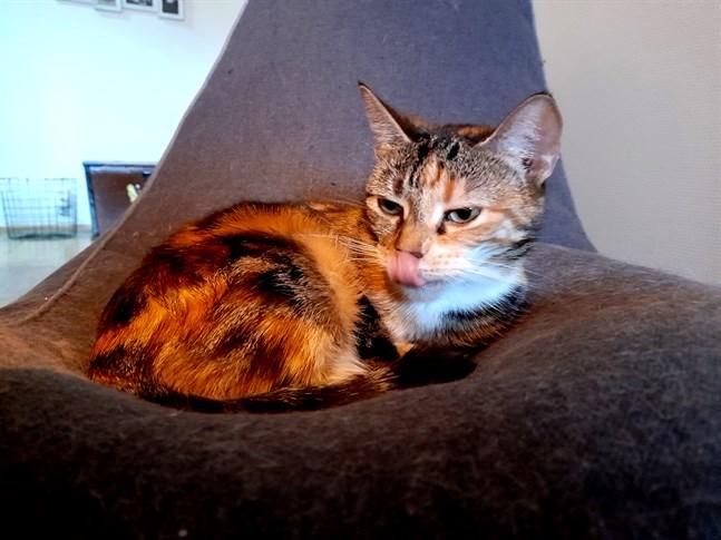 Ett bluffmeddelande om coronaviruset och katter har skickats ut i Österbotten.