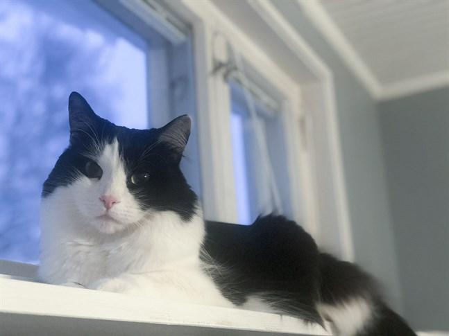 Ett skämtbrev om katter och corona har ställt till med en rejäl röra i Österbotten.