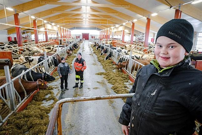 Daniel Granbacka, 12 år, är ofta i ladugården tillsammans med föräldrarna Heljä och Kennet. Djurhållningen är en livsstil för hela familjen där också Emma, 13 år, gärna deltar i jobbet.