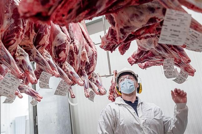 Magnus Söderlund inspekterar lammkött som hänger i kylen.