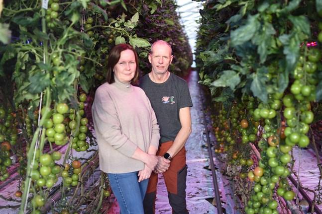 Carola och Martin Sigg har varit föregångare med konstbelysning och LED-lampor i tomatodling. Nu har de premierats som årets kvalitetsodlare.