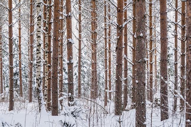 Finlands skogsforskning är framstående, påpekar Mats Nylund.