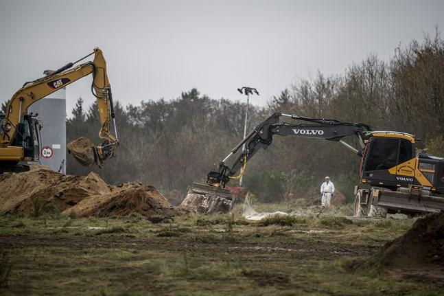 Minkavlivningen i Danmark var ett jätteprojekt. Här hanteras döda minkar på militärt område nära Holstebro på Jylland i november.