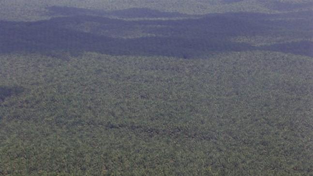 De indonesiska regnskogarna ruvar på många hemligheter. Arkivbild från Sumatra.
