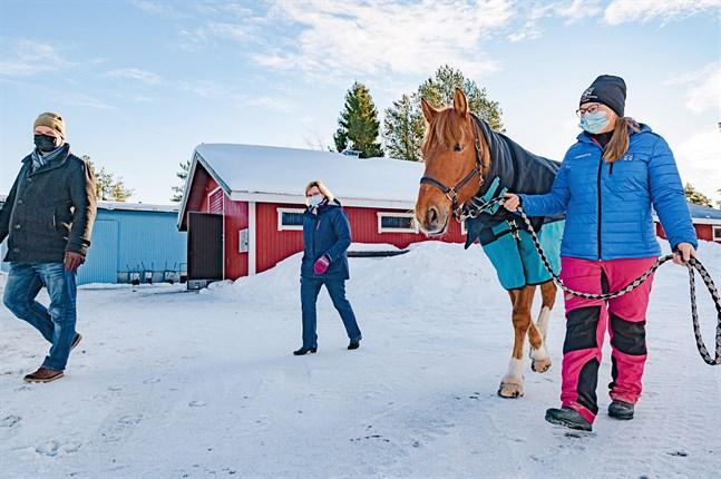 Tobias Elfving och Susann Friman från Kredu och Laura Erkkola på Nurk inleder till hösten ett nytt samarbete kring hästlinjen som folkhögskolan startar till hösten.