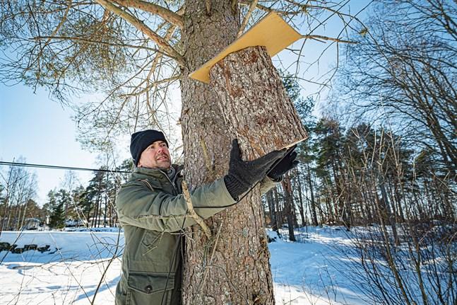 Janne Toivonen har byggt fågelholkar som han passar på att  hänga upp på Frill, som håller på att omvandlas från ett kommunalt slyområde till det kulturlandskap det en gång var.