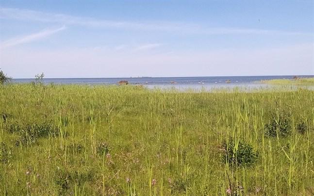 Strandängsområden i Socklot planeras att restaureras genom Helmi-projektet.