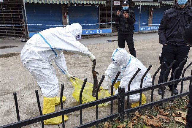 Virusutbrottet i Wuhan spårades tidigt till marknaden Huanan. Men rapporten från WHO:s besök i staden kan inte dra några tydliga slutsatser om marknadens roll när det gäller ursprunget till covid-19. Arkivbild.