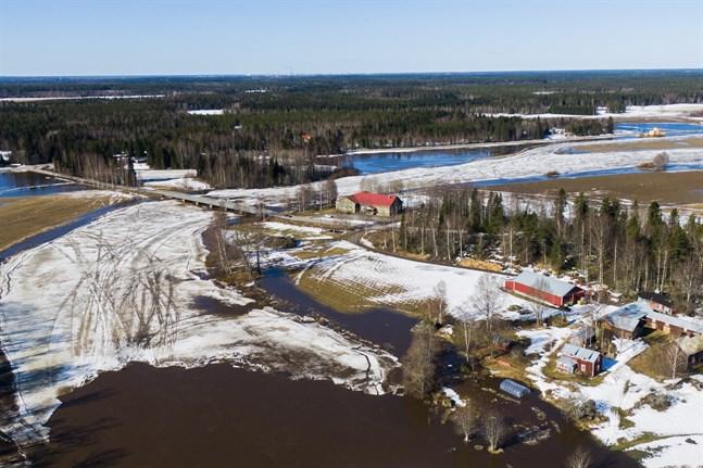 Det blev inga större översvämningar i Kyro älv den här gången. Bilden är tagen vid Skatila i onsdags före isen gick.