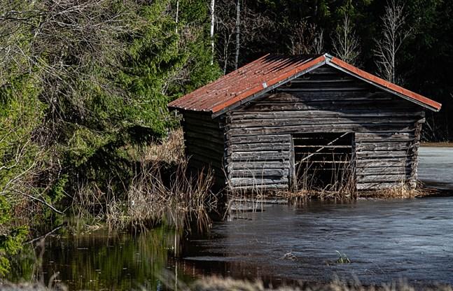 Regnet på fredagen och på måndag kan få vattennivån att stiga i åarna längs kusten i Södra Österbotten, Österbotten och Mellersta Österbotten. Bilden är tagen i Kronoby den sista mars.