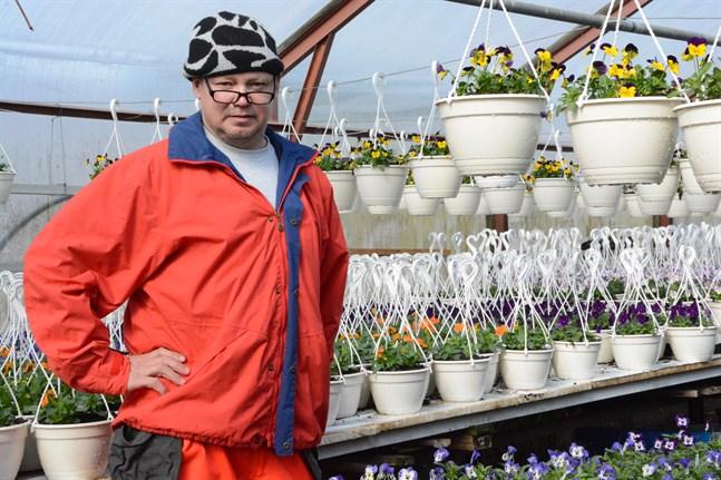 Kaj Sved behöver många hjälpande händer i växthusen under de mest hektiska veckorna på sommaren.